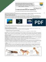 BIOLOGIA GUIA 2 CIRCULACION EN ANIMALES.doc