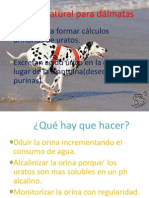 Dieta natural para dálmatas.pdf
