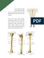 Anatomi (Tibia&Fibula)