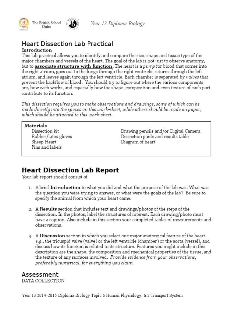 worksheet Sheep Heart Dissection Worksheet heart dissection guide valve atrium heart
