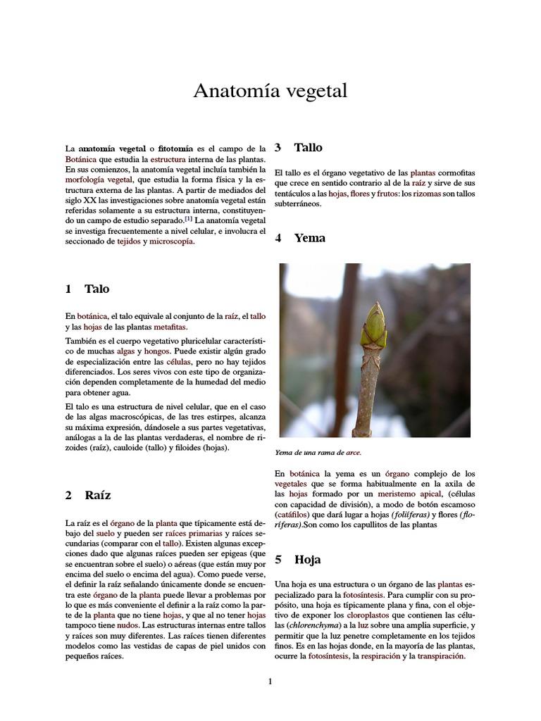 Anatomía vegetal.pdf