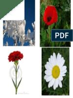 Presentación flores.ppt