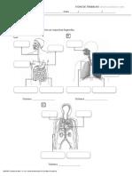 Estudo do meio fichas do corpo humano.docx