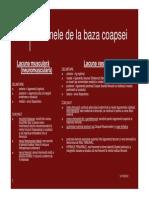 TOPOGRAFIE GL MEMBRUL INFERIOR.pdf