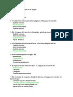 Preguntas histologia 2º