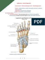 Αρθρώσεις - Joints & Ligaments