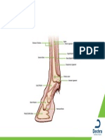 equine-lower-limb-structure.pdf