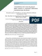 Capacidad remediadora de la raíz de girasol.pdf