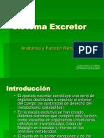 el sistema excretor.PPT
