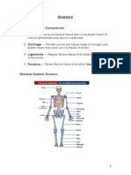 Skeleton of the human
