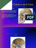 huesosdelcrneoydelacara-090812222554-phpapp02.ppt
