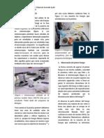 FUNGIS LABORATORIO DIVERSIDAD CELULAR III.docx