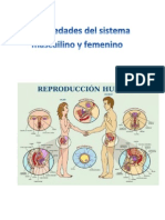 Enfermedades del sistema mascuilino y femenino.docx