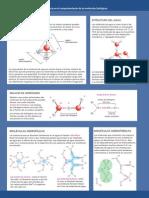 3 EL_agua_y_su_influencia_en_el_comportamiento_de_las_moleculas_biologicas.pdf