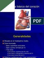 Anatomía básica del corazón.ppt