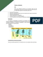 Apostila Biologia reino plantae.pdf