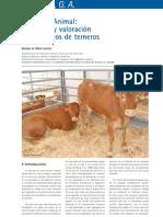 Cría y Salud 28_34-43_Bienestar Animal  Concepto y valoración en cebaderos de terneros