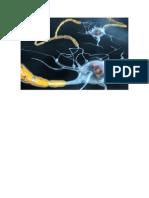 Sclerosi Multipla Sintomi Iniziali, Sclerosi Multipla Cura, Sclerosi Multipla Sintomi Diagnosi.pdf
