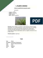 Plante Emerse