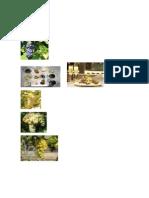 imagenes espumosos.pdf