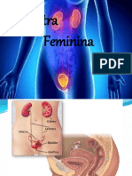 uretra feminina