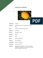 Double Fine améliorée.pdf
