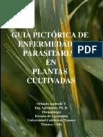 guia pictorica enfermedades vegetales