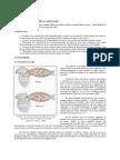 bloque-1-cap-3-tema-5.-hemodinamca-vascular.pdf