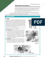 abejas.pdf