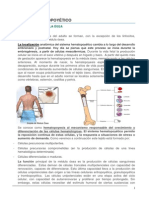 239_Hematopoyesis.pdf