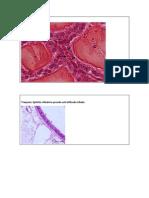 epitelios.docx