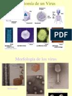 virus.pdf
