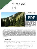 Padurea de conifere.doc