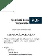 Respiração e fermentação.pdf