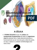 (1) Procariotos eucariotos.ppt