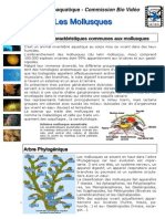 cours-biologie-marine-mollusques-ppt-ligne.pdf