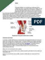 síndrome de la banda iliotibial.pdf