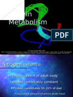 Lecture Presentation - Protein Metabolism