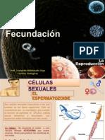 Presentacion la fecundacion.pptx