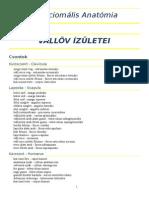 funkcionális anat.doc