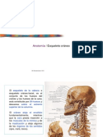 craneo 1.pdf