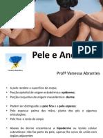 Pele e Anexos.pdf