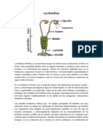 Las Briofitas.docx