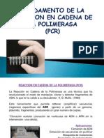 Fundamento PCR.ppt