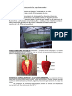 Pimiento.pdf