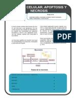 PREGUNTA 2 MORADO.pdf