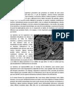 Bacteria.docx
