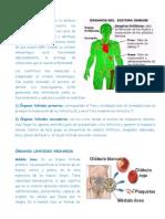 PLANEADOR 8° BIOLOGIA 4TO PERIODO.docx