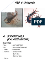 Scorpionida.pptx