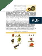 frutas[1].doc